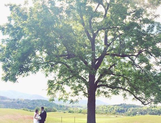 tree-thumbnail